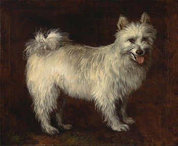 Thomas Gainsborough - Spitz Dog - Google Art Project.jpg