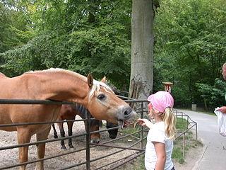 Sassnitz Wildlife Park zoo in Germany