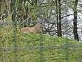 Tierpark Aachen 16.jpg