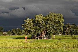 Tiny house surrounded by trees, inhabited in the middle of green paddy fields in sunshine under a stormy sky at golden hour in Laos.jpg