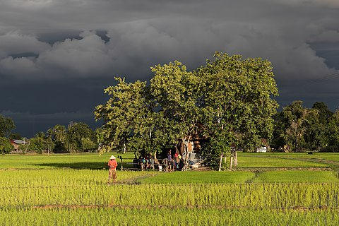 Tiny house surrounded by trees, inhabited in the middle of green paddy fields in sunshine under a stormy sky at golden hour in Laos