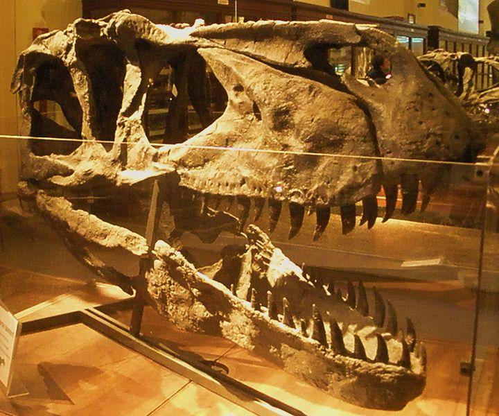File:Torvosaurus tanneri.JPG