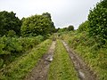 Track running by Dark Gill Plantation - geograph.org.uk - 532912.jpg