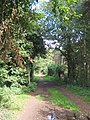 Track through the trees - geograph.org.uk - 545626.jpg