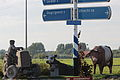 Tractor, Lakenvelder en Groninger Blaarkop - Joris Baudoin.jpg