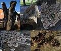 Trametes versicolor (GB= Turkeytail, D= Schmetterlingstramete, F= Tramète versicolore, NL= Gewoon elfenbankje) - panoramio.jpg