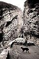 Transhumance dans les gorges de Saint-May.jpg