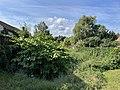 Trebbin-Mühlengraben Blick nach Süden.jpg