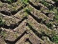 Treckerspur mit erstem Grün überwachsen.JPG