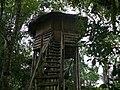 Tree House (17937964155).jpg