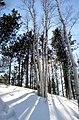 Tree Panorama (7444761).jpg