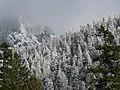 Trees (270ee844609542719cd050a56b90fec8).JPG