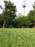 Trifolium fragiferum (subsp. fragiferum) sl24.jpg