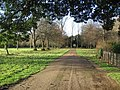 Trumpington Hall avenue - geograph.org.uk - 644161.jpg