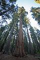 Tuolumne Grove Trailhead 11 (4245602454).jpg
