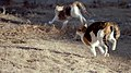 Two cats running outside.jpg