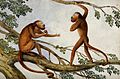 Two howling monkeys on a branch. Watercolour Wellcome V0050684.jpg