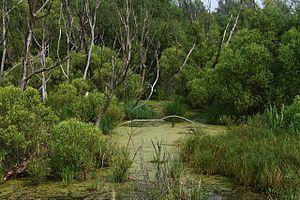 скачать болото торрент
