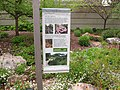 U.S. Botanic Garden in May (23777497815).jpg