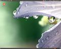 Ubuntu 11.04 zrzut ekranu 4.png