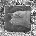 Uithangbord van een slager - Arnhem - 20025158 - RCE.jpg
