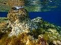 Underwater Ikaria view.jpg