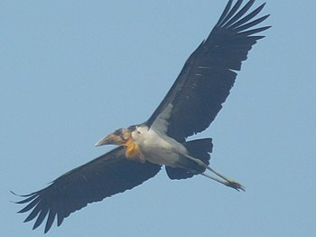 Unknown Identity-Bird.jpg