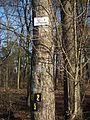 Unterer Dossenwald Baum mit Wandermarkierungen.JPG
