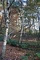 Verdieping in het bos (31547504225).jpg