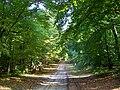 Verneuil-en-Halatte (60), Route des Bâtis dans la forêt d'Halatte.jpg