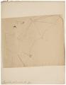 Vespertilio fulvus - 1700-1880 - Print - Iconographia Zoologica - Special Collections University of Amsterdam - UBA01 IZ20800111.tif