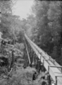 View of a water race leading to the Bryant Home, over a gully at Raglan. ATLIB 295023.png