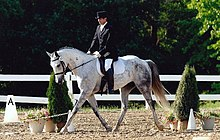 Viscount Starburst - Hungarian Warmblood.jpg