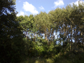 Vlakte van Waalsdorp (Waalsdorpervlakte) 2016-08-10 img. 561.png