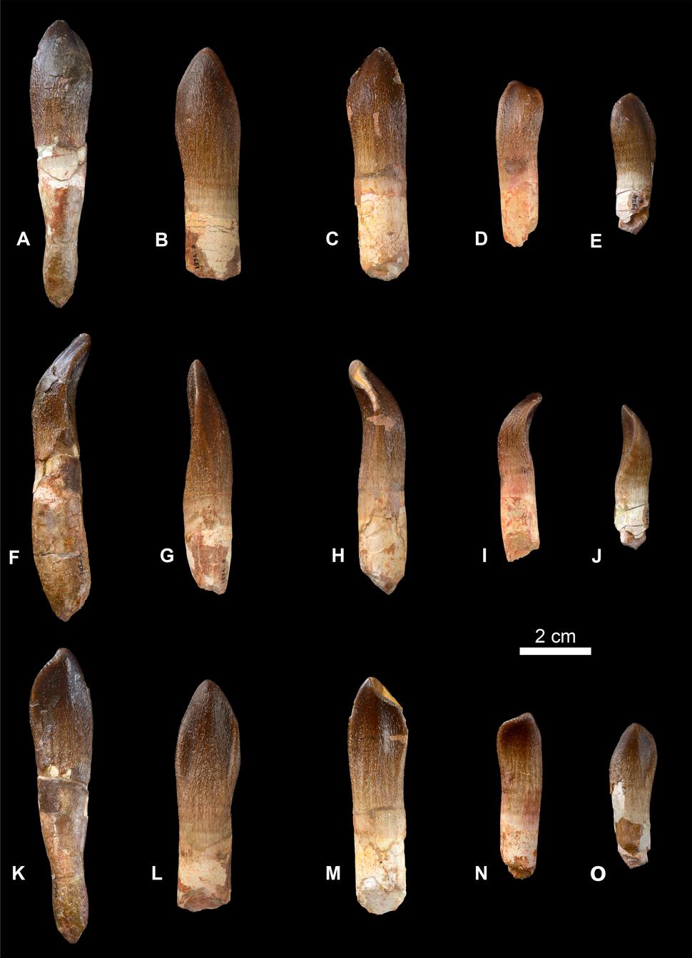 Vouivria teeth