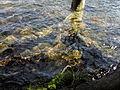 Vylet k Cernemu jezeru Sumava - 9.srpna 2010 170.JPG
