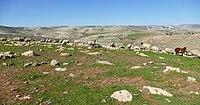 Wadi-Makukh-509.jpg
