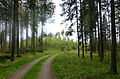 Wald bei Mödishofen 02.jpg