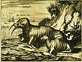 Walrus 1720.jpg