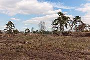 Wandeling over het Hulshorsterzand 54.jpg