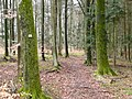 Wanderweg bei Deckenpfronn - panoramio.jpg