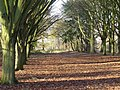 Waterhouse Plantation - geograph.org.uk - 1615088.jpg