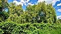 Weideswiesen-Oberwald bei Erlensee - Bäume am Bach.jpg