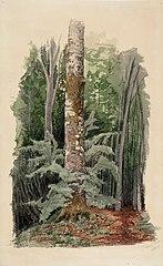 Metsänsisustaa, keskellä lehtipuun runko