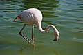 Westfalenpark-100821-17771-Flamingo.jpg