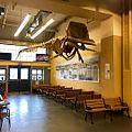Whaling museum (29753868730).jpg