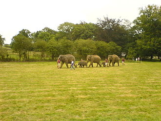 Whipsnade Zoo - Elephants being led around ZSL Whipsnade Zoo