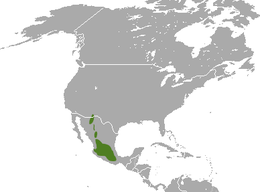 White-sided Jackrabbit area.png