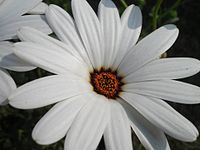 White is the sweetest color suits for a flower.jpg