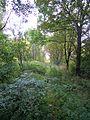 Widzew, Łódź, Poland - panoramio (48).jpg